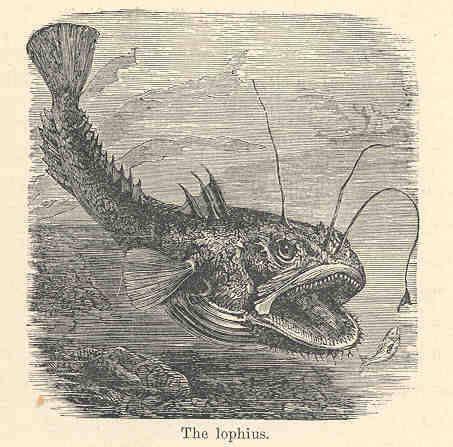 Image of Angler