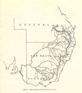 Image of Australian Smelt