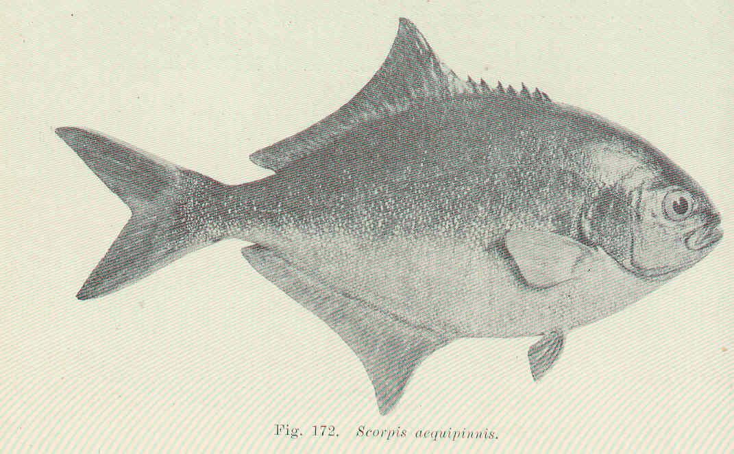 Image of Maomao