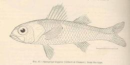 Image of <i>Synagrops argyreus</i> (Gilbert & Cramer 1897)