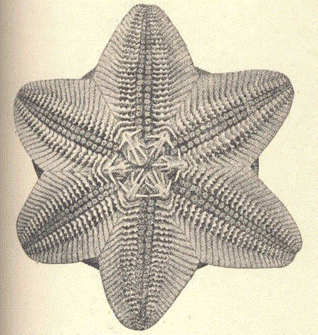Image of <i>Pteraster obscurus</i> (Perrier 1891)