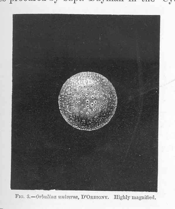 Image of <i>Orbulina universa</i> d'Orbigny 1839