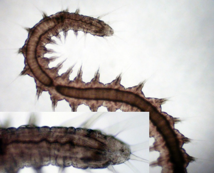 533.worms image 102838