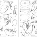 533.worms image 108170.130x130