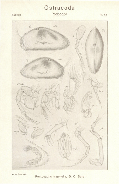 533.worms image 127128