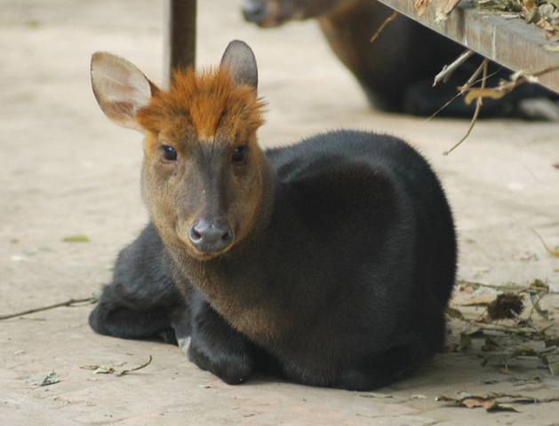 640.collections contributors david blank blackmuntjac