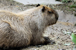 640.collections contributors david blank capybara2.260x190
