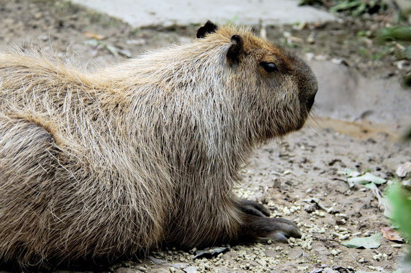 640.collections contributors david blank capybara2