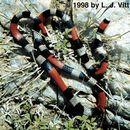 640.collections contributors laurie vitt mibiboboca.130x130