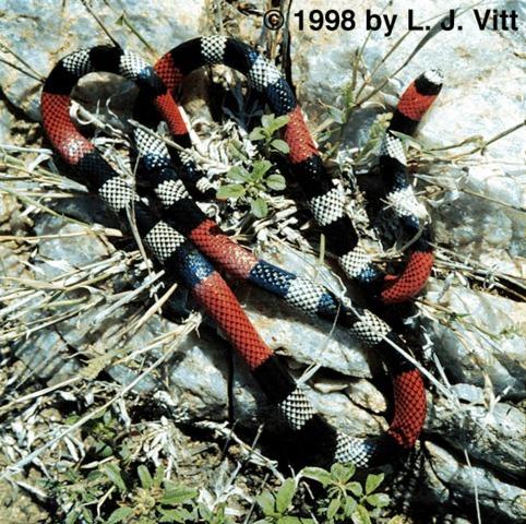 640.collections contributors laurie vitt mibiboboca