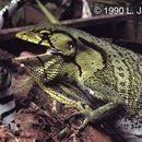 640.collections contributors laurie vitt pliogaster.130x130