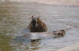640.collections contributors tanya dewey dzcapybara1.260x190