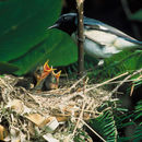 640.collections contributors usfws blackthroatedbluewarbler.130x130