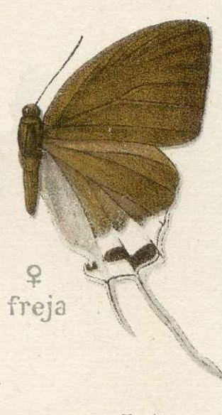 Image of Cheritra