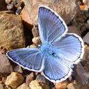 Image of Escher's Blue