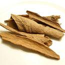 Image of <i>Cinnamomum loureiroi</i> Nees