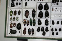 Image of arthropods