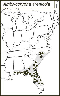 Map of Sandhill Virtuoso Katydid