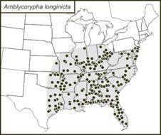 Map of Common Virtuoso Katydid