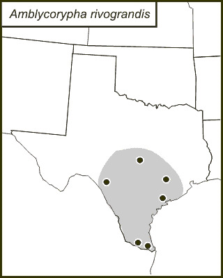 Map of Rio Grande Virtuoso Katydid