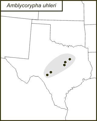 Map of Uhler's Virtuoso Katydid