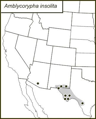 Map of Big Bend False Katydid