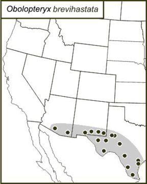 """<span class=""""translation_missing"""" title=""""translation missing: mk.medium.untitled.map_image_of, page_name: &lt;i&gt;Obolopteryx brevihastata&lt;/i&gt; (Morse 1902)"""">Map Image Of</span>"""