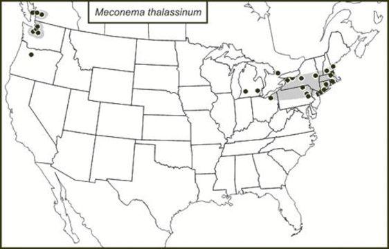 "<span class=""translation_missing"" title=""translation missing: en.medium.untitled.map_image_of, page_name: Meconematinae Burmeister 1838"">Map Image Of</span>"