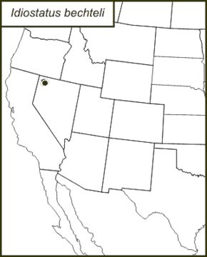 "<span class=""translation_missing"" title=""translation missing: mk.medium.untitled.map_image_of, page_name: &lt;i&gt;Idiostatus bechteli&lt;/i&gt; Rentz &amp; D. C. F. 1973"">Map Image Of</span>"