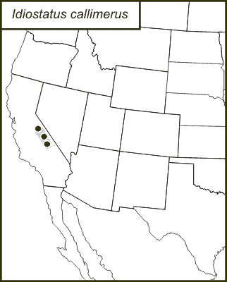 Map of Pretty-thigh Shieldback