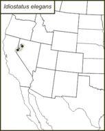 Map of Elegant Shieldback