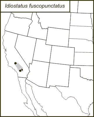 Map of Black-dotted Shieldback