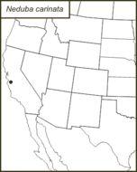 Map of <i>Neduba carinata</i> Walker & F. 1869