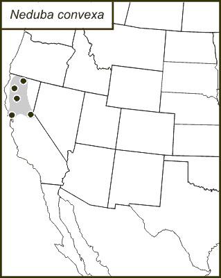 Map of <i>Neduba convexa</i> Caudell 1907
