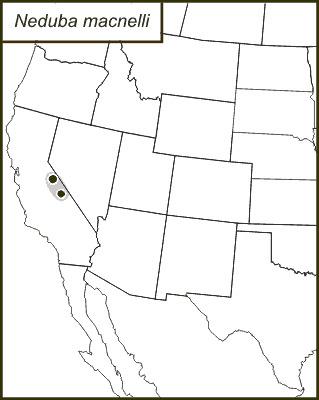 Map of MacNeill's Shieldback