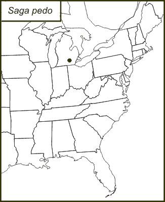 "<span class=""translation_missing"" title=""translation missing: en.medium.untitled.map_image_of, page_name: Common Predatory Bush-cricket"">Map Image Of</span>"