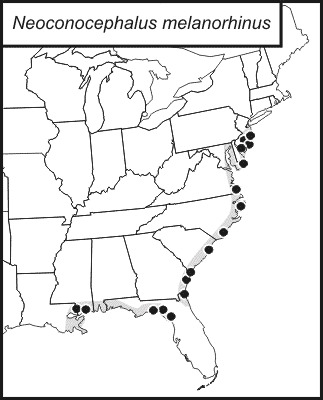 Map of Black-nosed Conehead