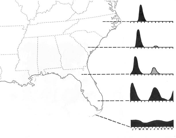 Map of Broad-tipped Conehead