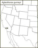 Map of <i>Aglaothorax gurneyi</i> (Rentz, D. C. F. & Birchim 1968)