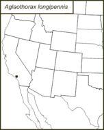 Map of <i>Aglaothorax longipennis</i> (Rentz, D. C. F. & Weissman 1981)