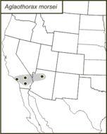 Map of <i>Aglaothorax morsei</i> (Caudell 1907)