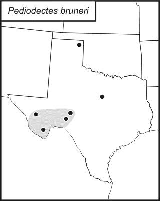 Map of <i>Pediodectes bruneri</i> (Caudell 1907)
