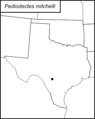 Map of <i>Pediodectes mitchelli</i> (Caudell 1911)