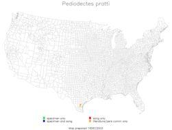 Map of <i>Pediodectes pratti</i> (Caudell 1911)