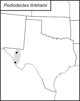 Map of <i>Pediodectes tinkhami</i> Hebard 1934