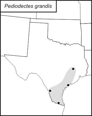 Map of Grand Shieldback