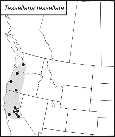 Map of Tessellated Shieldback
