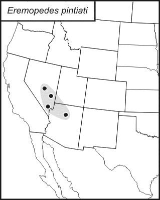 Map of <i>Eremopedes</i> (<i>Oreopedes</i>) <i>pintiati</i> Rentz & D. C. F. 1972