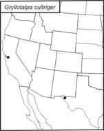 Map of Western Mole Cricket