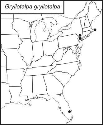 "<span class=""translation_missing"" title=""translation missing: en.medium.untitled.map_image_of, page_name: European Mole Cricket"">Map Image Of</span>"